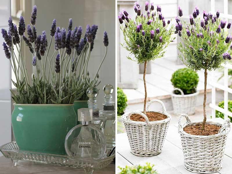Plantas para decorar el interior de tu departamento for Plantas para macetas grandes de exterior
